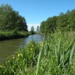 rzeka Bauda na trasie Nowa pasłęka - Frombork