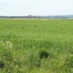 Rozległe łąki z Fromborkiem w tle