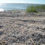 Plaża muszelkowa - Różaniec